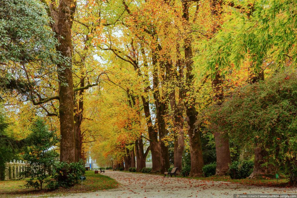 Ботанический сад в Сочи