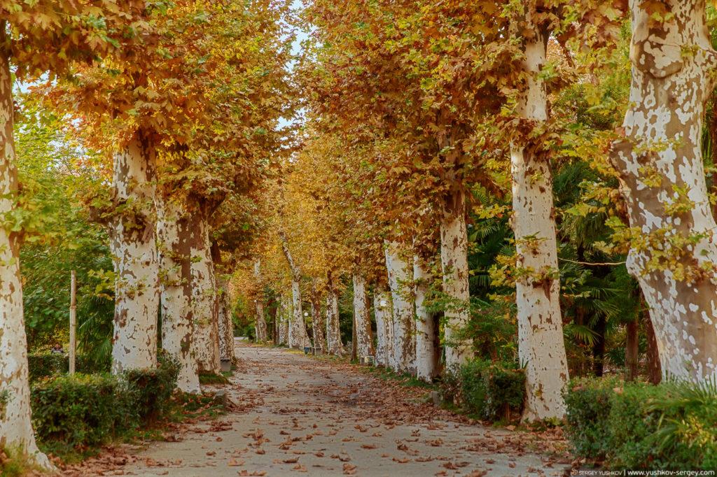 Приморский парк. Гагра. Абхазия