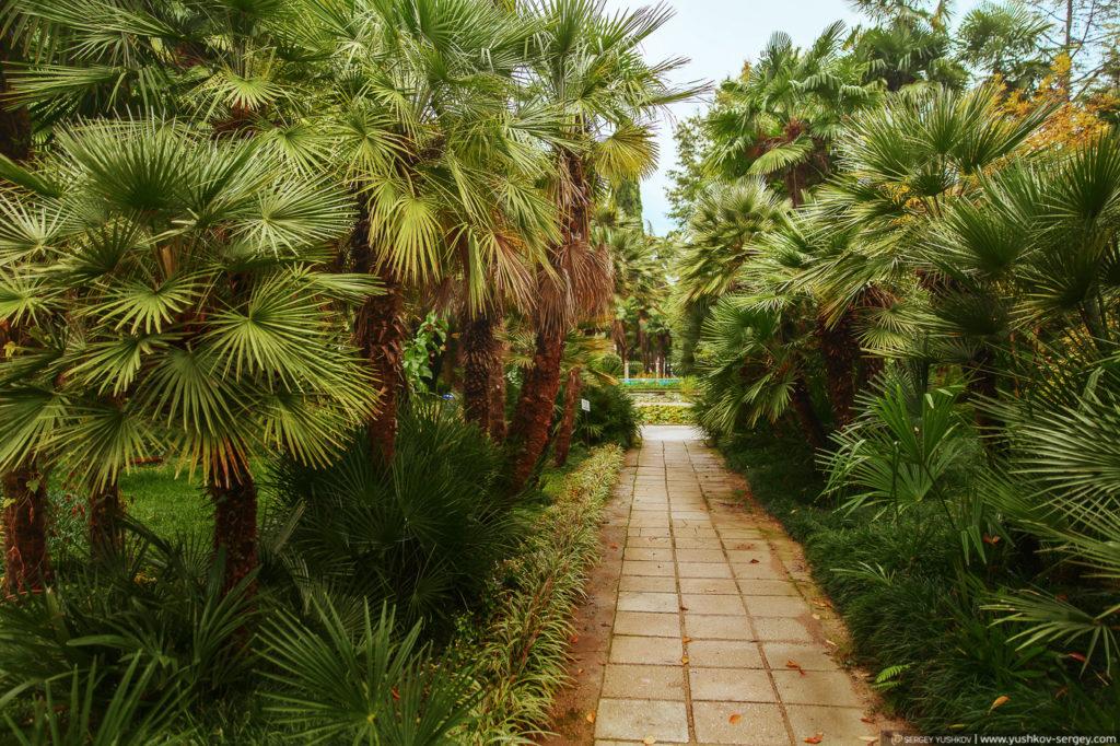 Ботанический сад. Сухум. Абхазия